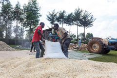 Workers drag a bag of maize Royalty Free Stock Images