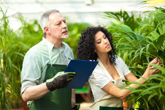 Workers examining plants. In a greenhouse Royalty Free Stock Photos