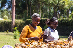 Workers at a farm Stock Photography