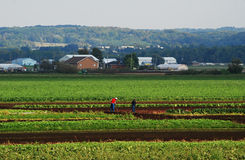 Workers in a field Stock Photography