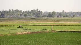 Workers on a field stock footage
