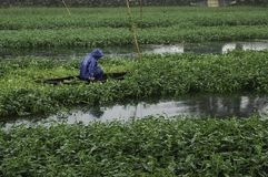 Workers in the fields during a rainy day in hue. Vietnam stock images