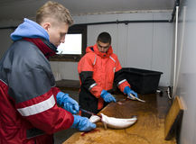 Workers filleting fish stock image