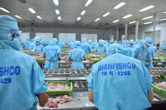 Workers are filleting pangasius catfish in a seafood factory in the Mekong delta of Vietnam Stock Photography