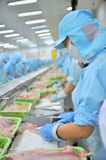 Workers are filleting pangasius catfish in a seafood factory in the Mekong delta of Vietnam Stock Photo