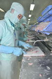 Workers are filleting of pangasius catfish  in a seafood processing plant in An Giang, a province in the Mekong delta of Vietnam Royalty Free Stock Photography