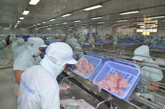 Workers are filleting of pangasius catfish  in a seafood processing plant in An Giang, a province in the Mekong delta of Vietnam Stock Image