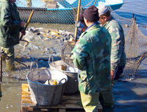Workers in the fisheries Royalty Free Stock Photography