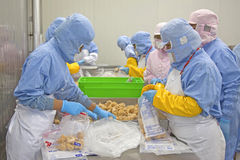 workers in food processing production line Royalty Free Stock Photos