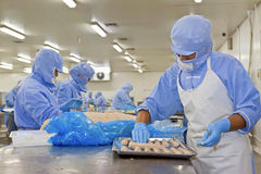 workers in food processing production line Royalty Free Stock Image