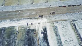 Workers Gather Salt with Shovels on Plantations. Aerial panorama Asian workers gather evaporated salt with special shovels on large white plantations in rural stock video footage