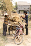 Workers gathering hay, Seam Reap, Cambodia Stock Photography