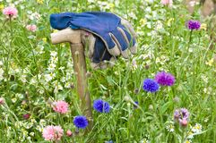 Workers glove in a wild flower meadow Stock Photography