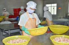 Workers are grading shrimps in a seafood factory in Vietnam. NHA TRANG, VIETNAM - MARCH 5, 2012: Workers are grading shrimps in a seafood factory in Vietnam Royalty Free Stock Photography