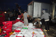 Workers are grinding ice to preserve tuna fish in the Hon Ro seaport, Nha Trang city Royalty Free Stock Photography