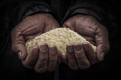 Workers hand carry rice. In the dark stock images