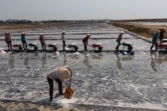 Workers harvesting salt in salt fields at Binh Thuan, Vietnam Stock Photography