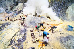 Workers at Ijen crater in Java, Indonesia collecting sulpher Stock Image