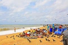 Free Workers In Negombo Fish Market, Sri Lanka Stock Photos - 94122173