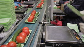 Workers lay out plastic green containers on the automatic production line. Operators packages one cucumber and several tomatoes in trays. Amount of vegetables stock footage