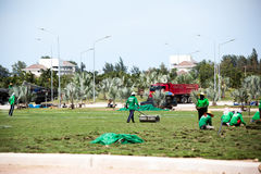 Workers are laying turf. Workers are laying on the grass field Stock Image
