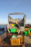 Workers are loading forage fish onto the truck to the feed mill in Lagi seaport Stock Photos