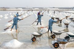 Workers make salt piles at the Hon Khoi salt fields in Nha Trang Royalty Free Stock Images