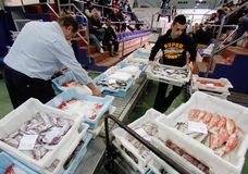 Workers moving cargo on fish market Stock Photography