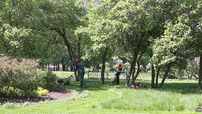 Workers mowing the grass with motor grass cutter in the Moscow park