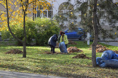 The workers of the municipality collect leaves in the park. Women social workers removed the foliage. Stock Image