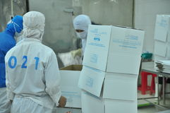 Workers are packaging product for export in a seafood factory in Vietnam Royalty Free Stock Images