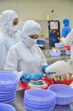 Workers are packaging product for export in a seafood factory in Vietnam Stock Photo