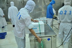 Workers are packaging product for export in a seafood factory in Vietnam Royalty Free Stock Image