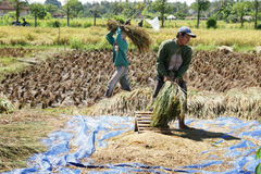 Workers in paddy field Royalty Free Stock Photo