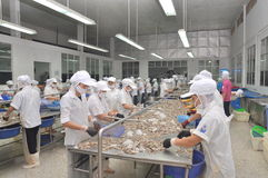 Workers are peeling fresh raw shrimps in a seafood factory in Quy Nhon city, Vietnam Stock Images