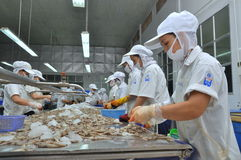 Workers are peeling fresh raw shrimps in a seafood factory in Quy Nhon city, Vietnam Royalty Free Stock Photography