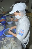 Workers are peeling fresh raw shrimps in a seafood factory in Quy Nhon city, Vietnam Stock Photography
