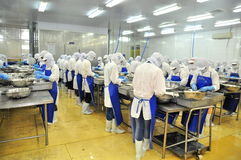 Workers are peeling and processing fresh raw shrimps in a seafood factory in the Mekong delta of Vietnam Royalty Free Stock Photo