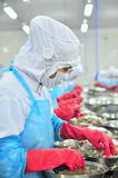 Workers are peeling and processing fresh raw shrimps in a seafood factory in Vietnam Royalty Free Stock Images