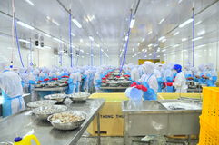 Workers are peeling and processing fresh raw shrimps in a seafood factory in Vietnam Stock Image