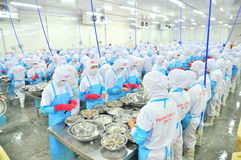 Workers are peeling and processing fresh raw shrimps in a seafood factory in Vietnam Royalty Free Stock Photography