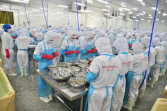 Workers are peeling and processing fresh raw shrimps in a seafood factory in Vietnam Royalty Free Stock Photos