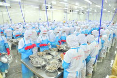 Workers are peeling and processing fresh raw shrimps in a seafood factory in Vietnam Royalty Free Stock Image