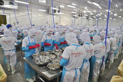 Workers are peeling and processing fresh raw shrimps in a seafood factory in Vietnam Stock Images