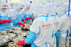 Workers are peeling and processing fresh raw shrimps in a seafood factory in Vietnam Royalty Free Stock Photo