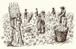 Workers picking cotton. Hand drawn illustration Royalty Free Stock Images