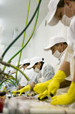 Workers in plant. Workers in a fish processing plant Stock Images