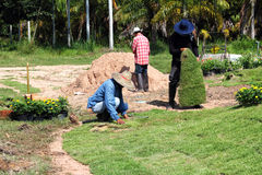 Workers planting new sod grass Stock Photo