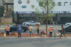 The workers are planting trees Stock Photos