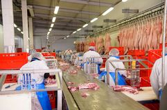 Workers of pork meat manufacturing Stock Image